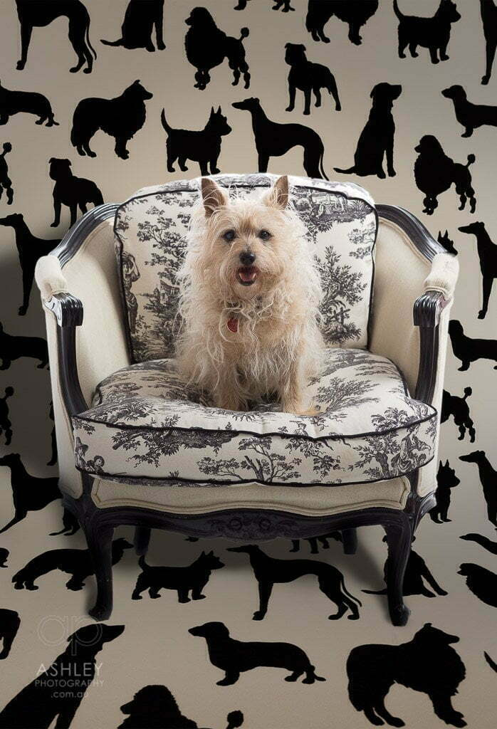 Ashley Photography, Pet Portraits